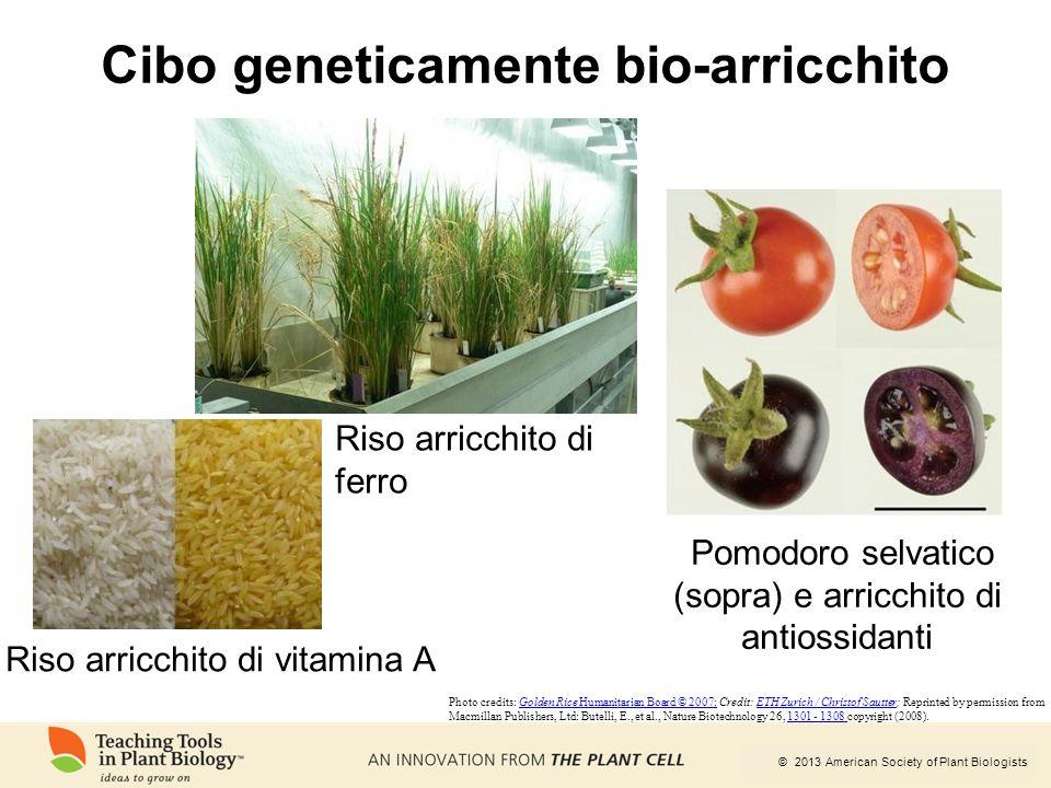 Cibo geneticamente bio-arricchito
