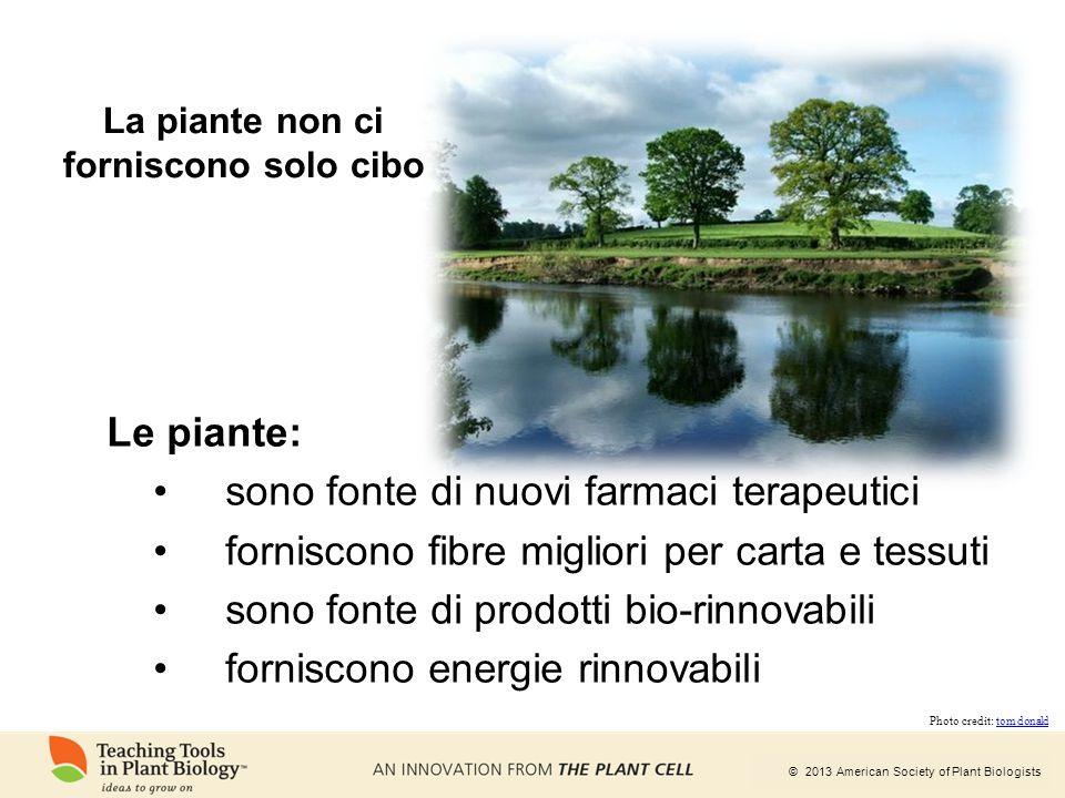 La piante non ci forniscono solo cibo