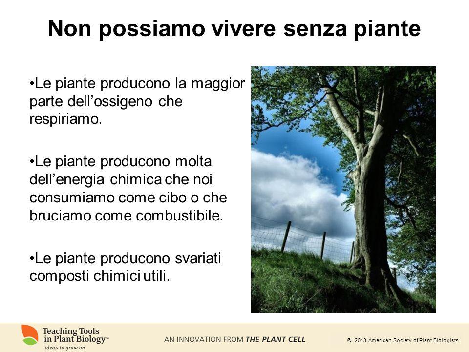 Non possiamo vivere senza piante