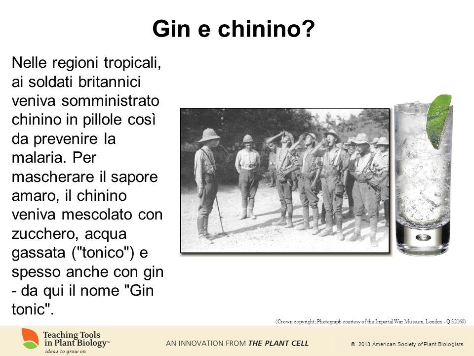 Gin e chinino