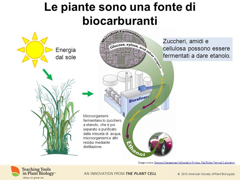 Le piante sono una fonte di biocarburanti