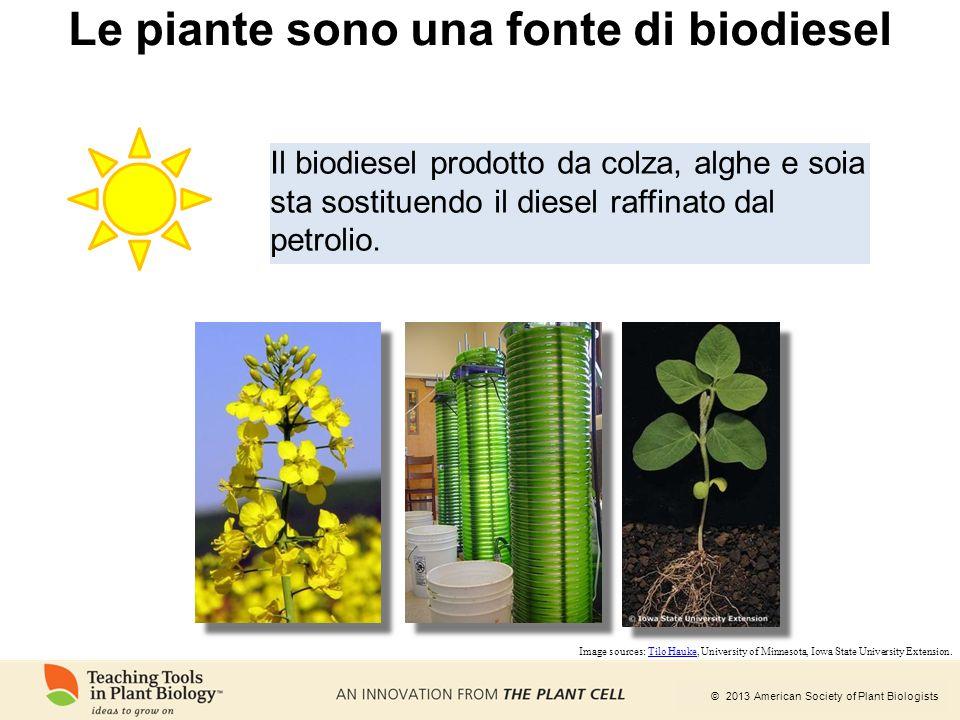 Le piante sono una fonte di biodiesel