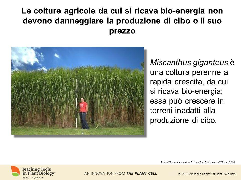 Le colture agricole da cui si ricava bio-energia non devono danneggiare la produzione di cibo o il suo prezzo