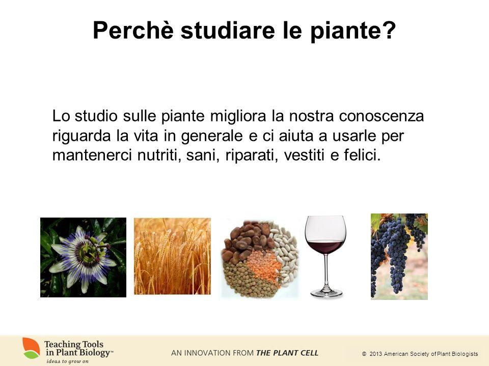 Perchè studiare le piante