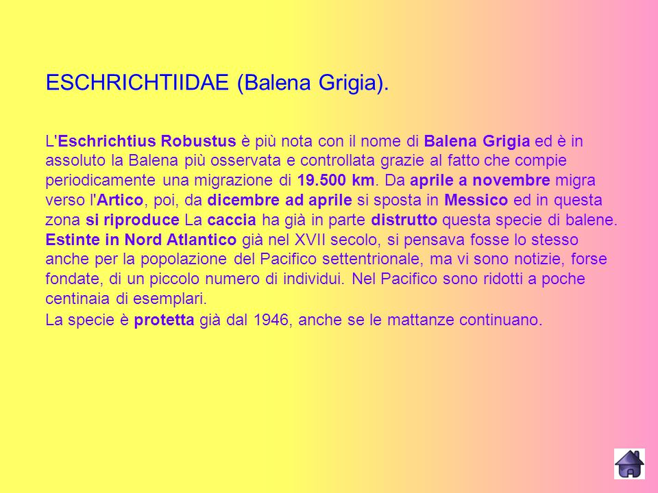 ESCHRICHTIIDAE (Balena Grigia).