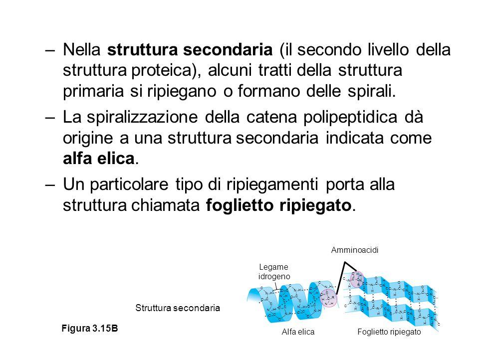 Nella struttura secondaria (il secondo livello della struttura proteica), alcuni tratti della struttura primaria si ripiegano o formano delle spirali.