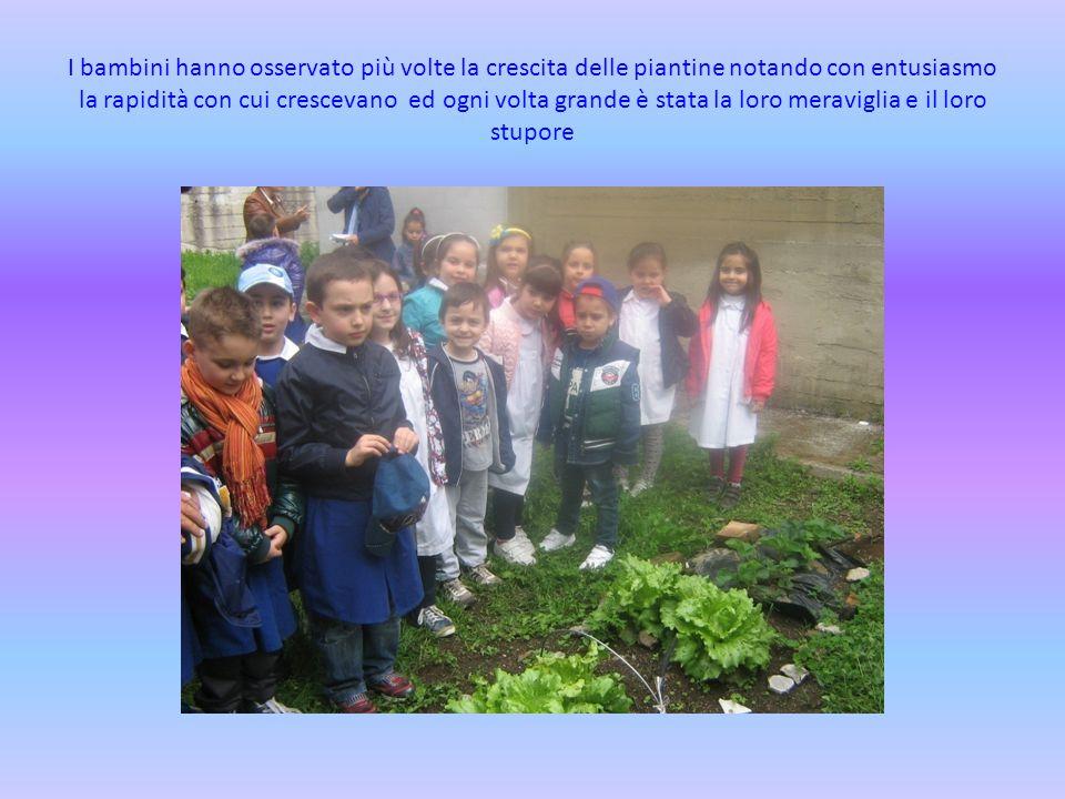 I bambini hanno osservato più volte la crescita delle piantine notando con entusiasmo la rapidità con cui crescevano ed ogni volta grande è stata la loro meraviglia e il loro stupore