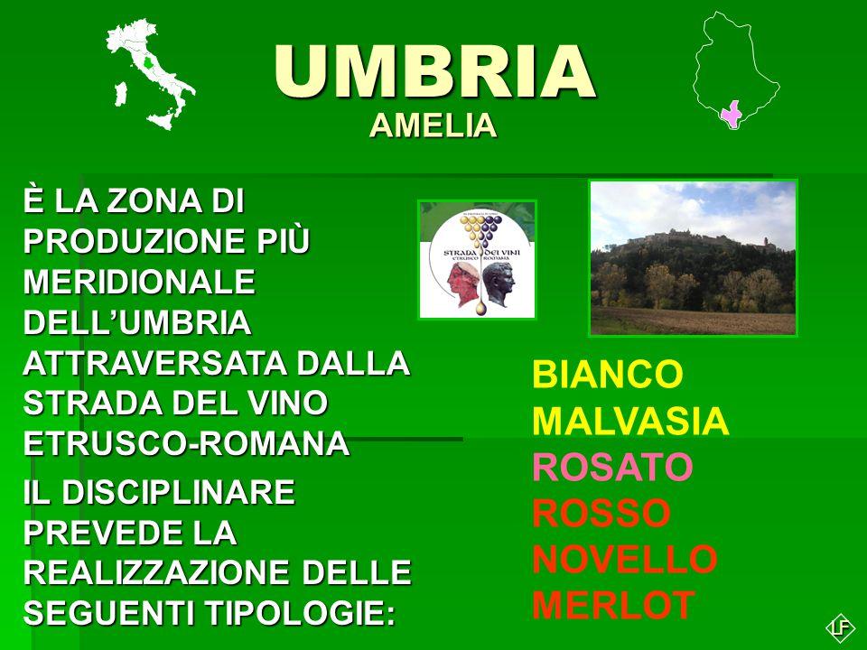 UMBRIA BIANCO MALVASIA ROSATO ROSSO NOVELLO MERLOT AMELIA