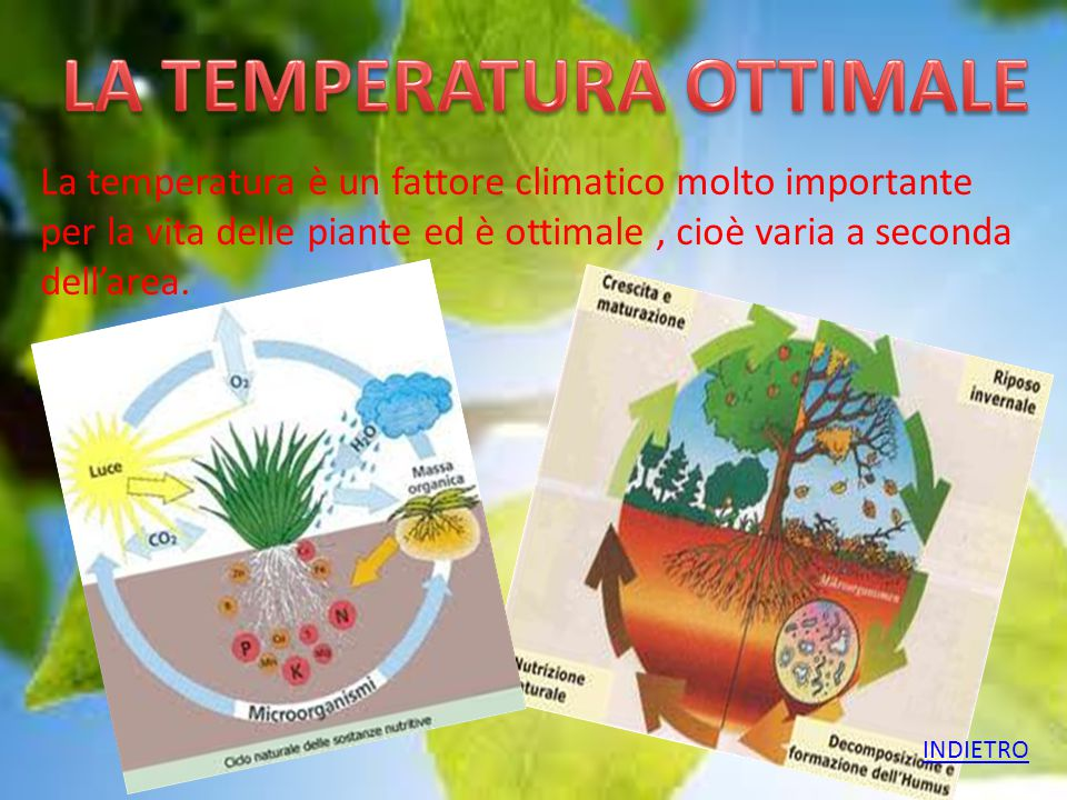 LA TEMPERATURA OTTIMALE