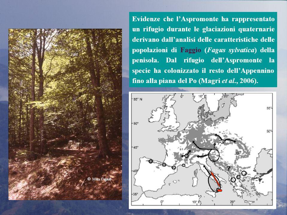 Evidenze che l'Aspromonte ha rappresentato un rifugio durante le glaciazioni quaternarie derivano dall'analisi delle caratteristiche delle popolazioni di Faggio (Fagus sylvatica) della penisola. Dal rifugio dell'Aspromonte la specie ha colonizzato il resto dell'Appennino fino alla piana del Po (Magri et al., 2006).