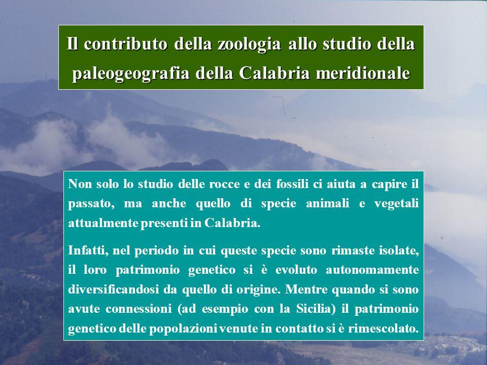 Il contributo della zoologia allo studio della paleogeografia della Calabria meridionale