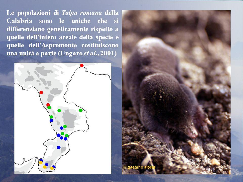 Le popolazioni di Talpa romana della Calabria sono le uniche che si differenziano geneticamente rispetto a quelle dell'intero areale della specie e quelle dell'Aspromonte costituiscono una unità a parte (Ungaro et al., 2001)