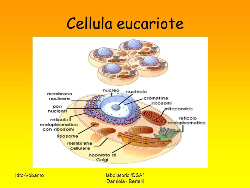 Cellula eucariote Idro-Vobarno laboratorio DSA Damiola - Bertelli