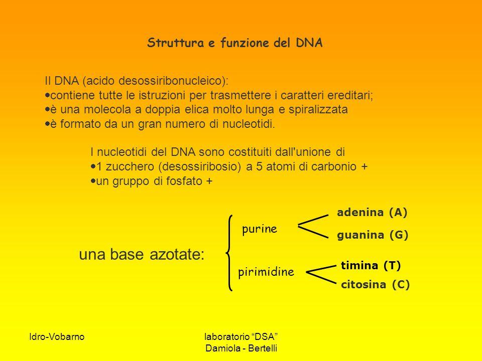 Struttura e funzione del DNA