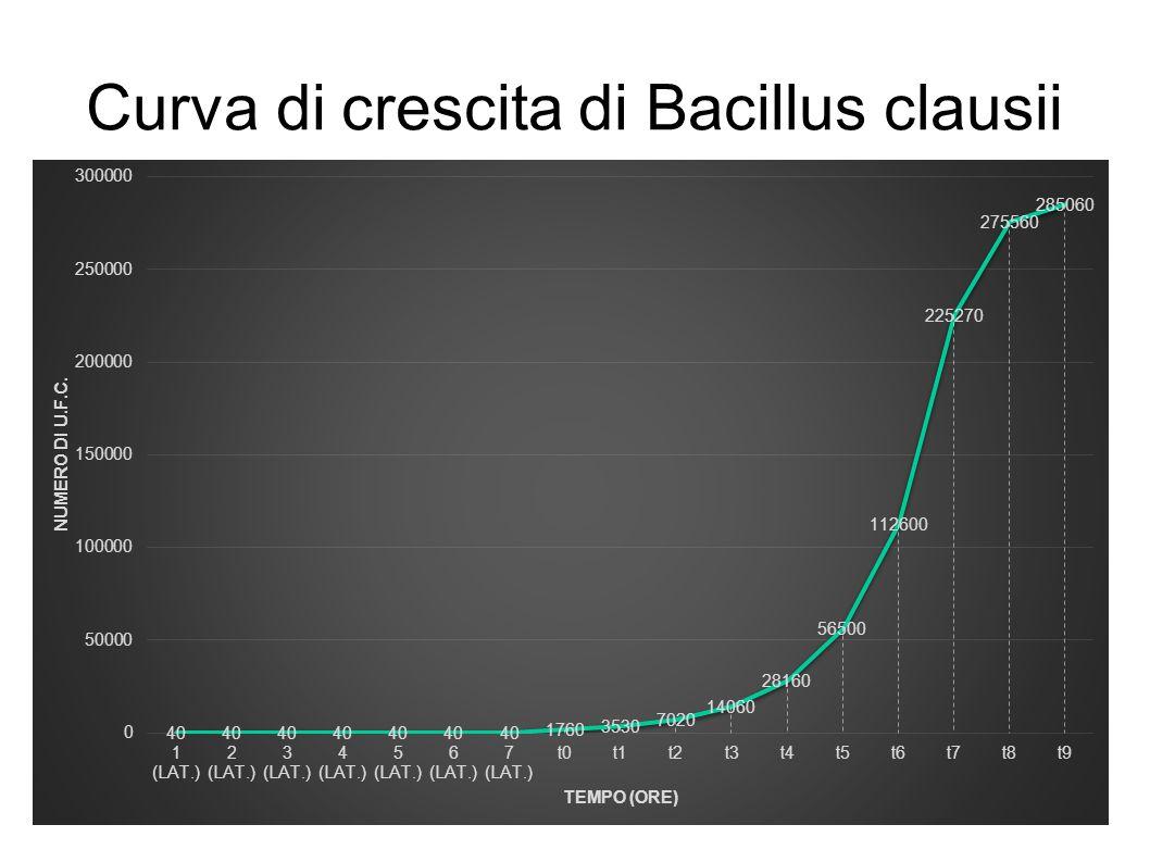 Curva di crescita di Bacillus clausii