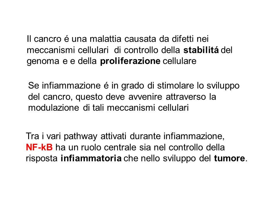 Il cancro é una malattia causata da difetti nei meccanismi cellulari di controllo della stabilitá del genoma e e della proliferazione cellulare