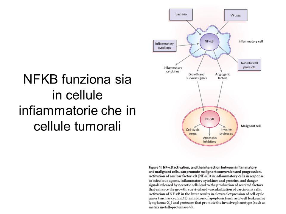 NFKB funziona sia in cellule infiammatorie che in cellule tumorali