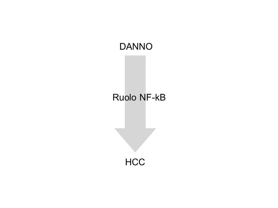 DANNO HCC Ruolo NF-kB