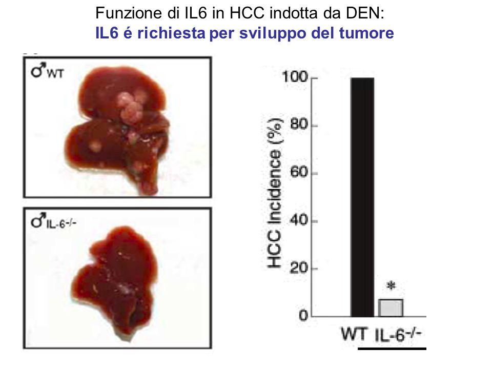Funzione di IL6 in HCC indotta da DEN: