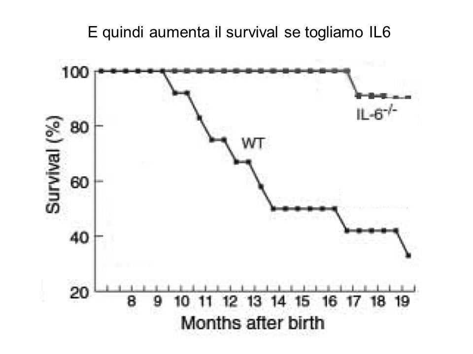 E quindi aumenta il survival se togliamo IL6