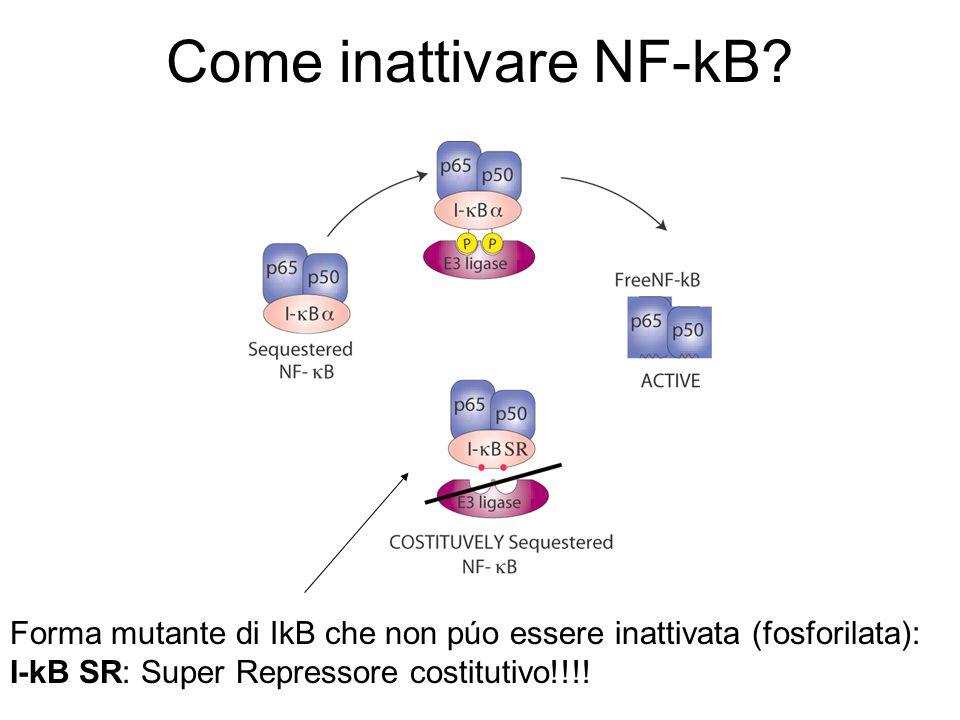 Come inattivare NF-kB.
