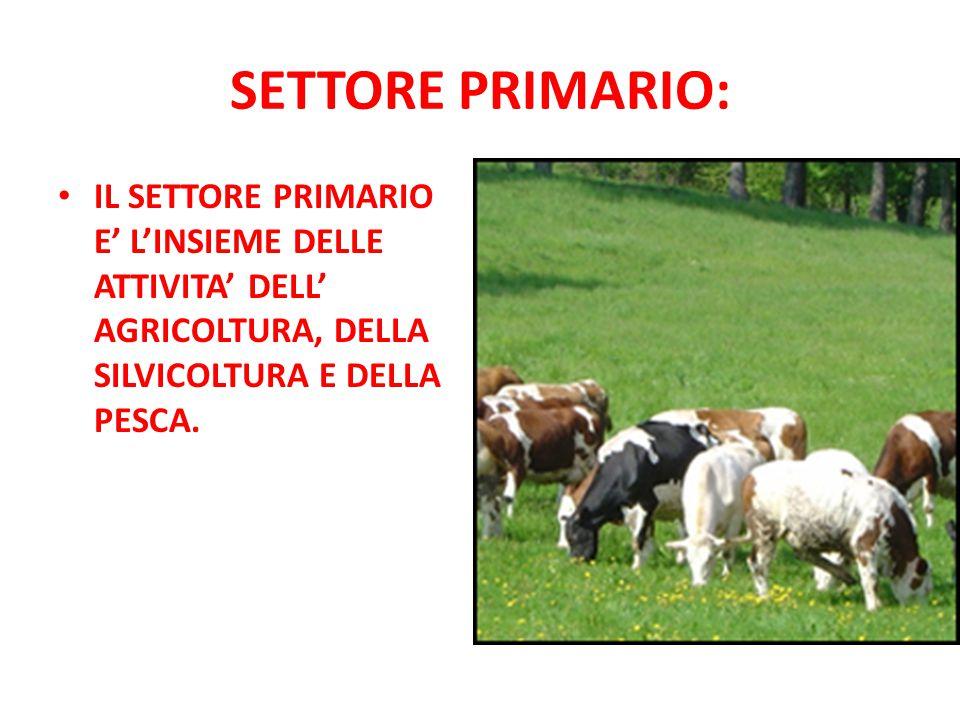 SETTORE PRIMARIO: IL SETTORE PRIMARIO E' L'INSIEME DELLE ATTIVITA' DELL' AGRICOLTURA, DELLA SILVICOLTURA E DELLA PESCA.
