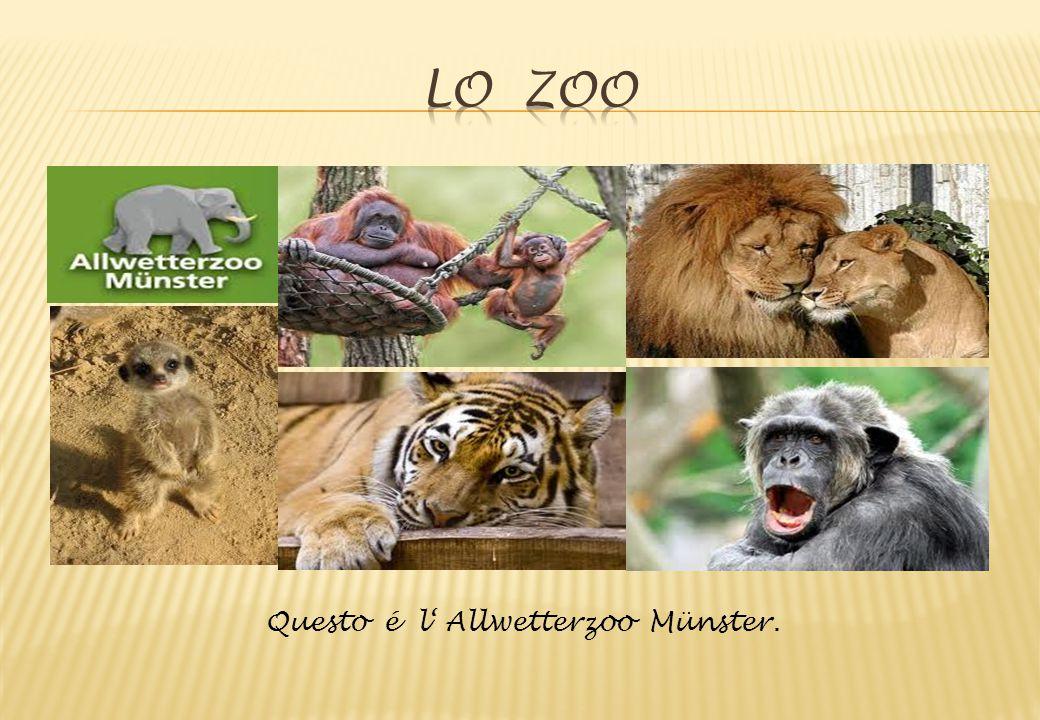 Lo zoo Questo é l' Allwetterzoo Münster.