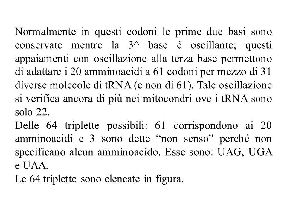 Normalmente in questi codoni le prime due basi sono conservate mentre la 3^ base é oscillante; questi appaiamenti con oscillazione alla terza base permettono di adattare i 20 amminoacidi a 61 codoni per mezzo di 31 diverse molecole di tRNA (e non di 61). Tale oscillazione si verifica ancora di più nei mitocondri ove i tRNA sono solo 22.