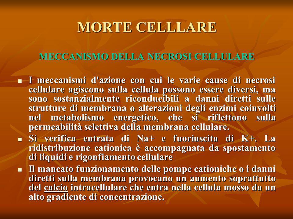 MECCANISMO DELLA NECROSI CELLULARE