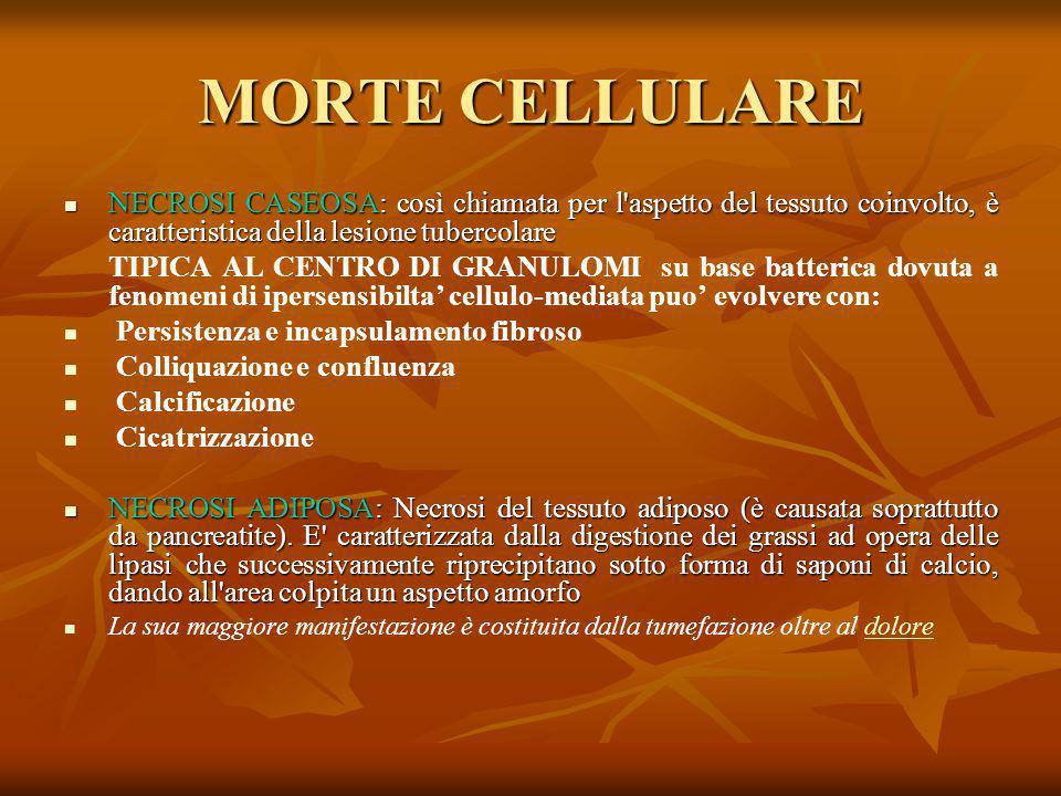 MORTE CELLULARE NECROSI CASEOSA: così chiamata per l aspetto del tessuto coinvolto, è caratteristica della lesione tubercolare.