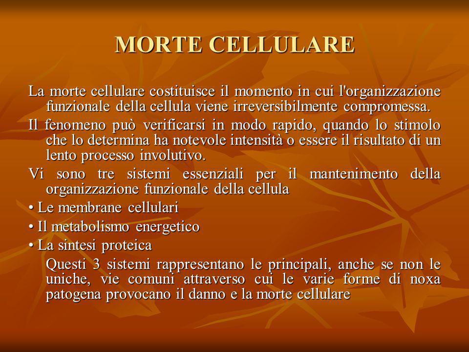 MORTE CELLULARE La morte cellulare costituisce il momento in cui l organizzazione funzionale della cellula viene irreversibilmente compromessa.