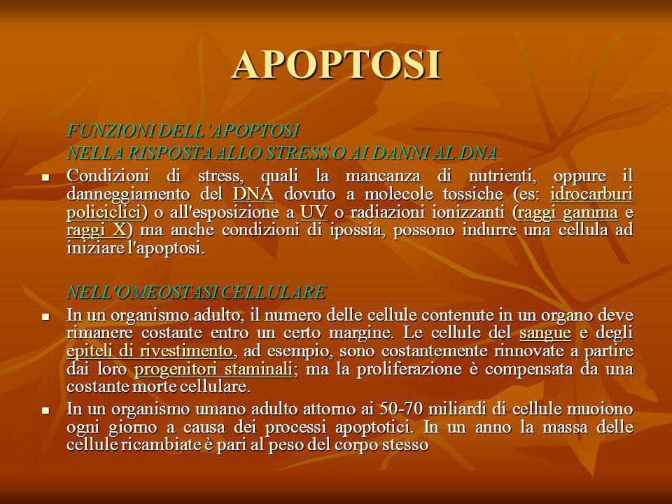 APOPTOSI FUNZIONI DELL'APOPTOSI