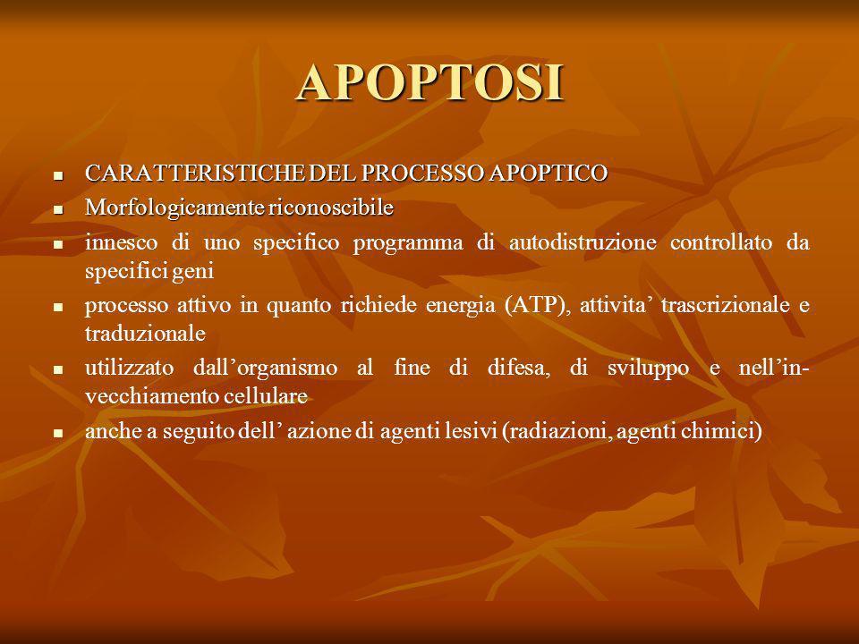 APOPTOSI CARATTERISTICHE DEL PROCESSO APOPTICO
