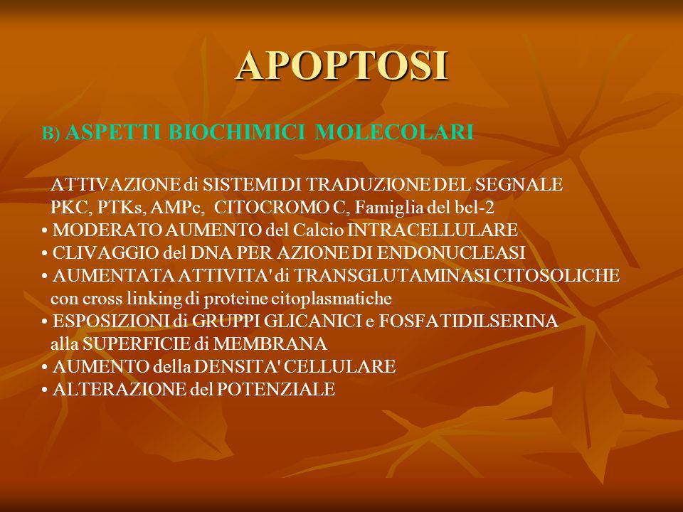 APOPTOSI B) ASPETTI BIOCHIMICI MOLECOLARI