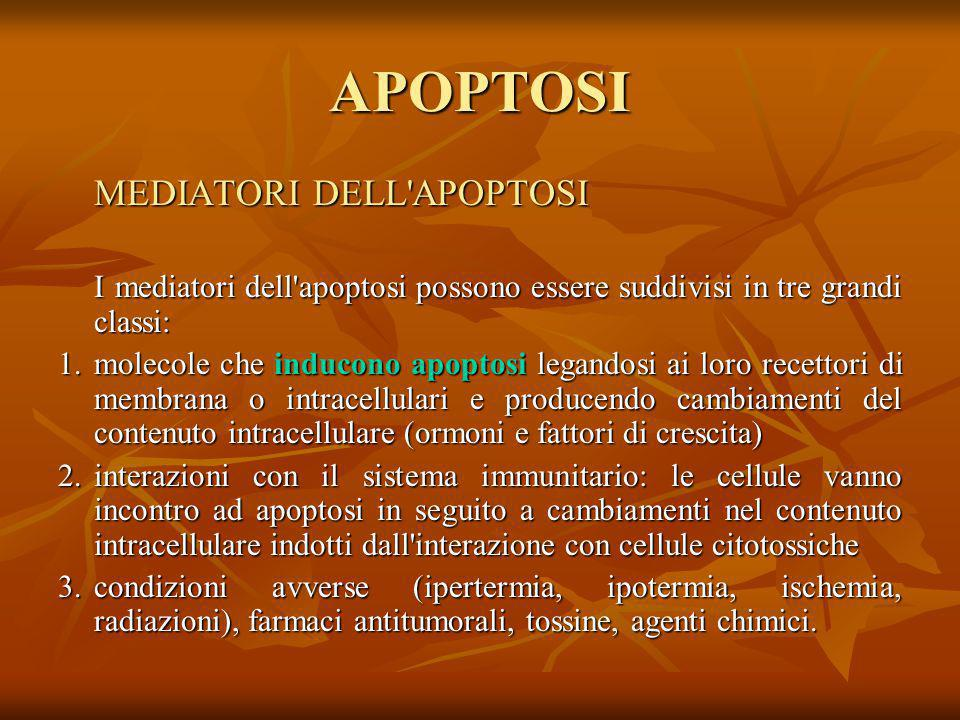 APOPTOSI MEDIATORI DELL APOPTOSI