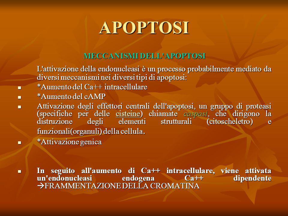 MECCANISMI DELL APOPTOSI