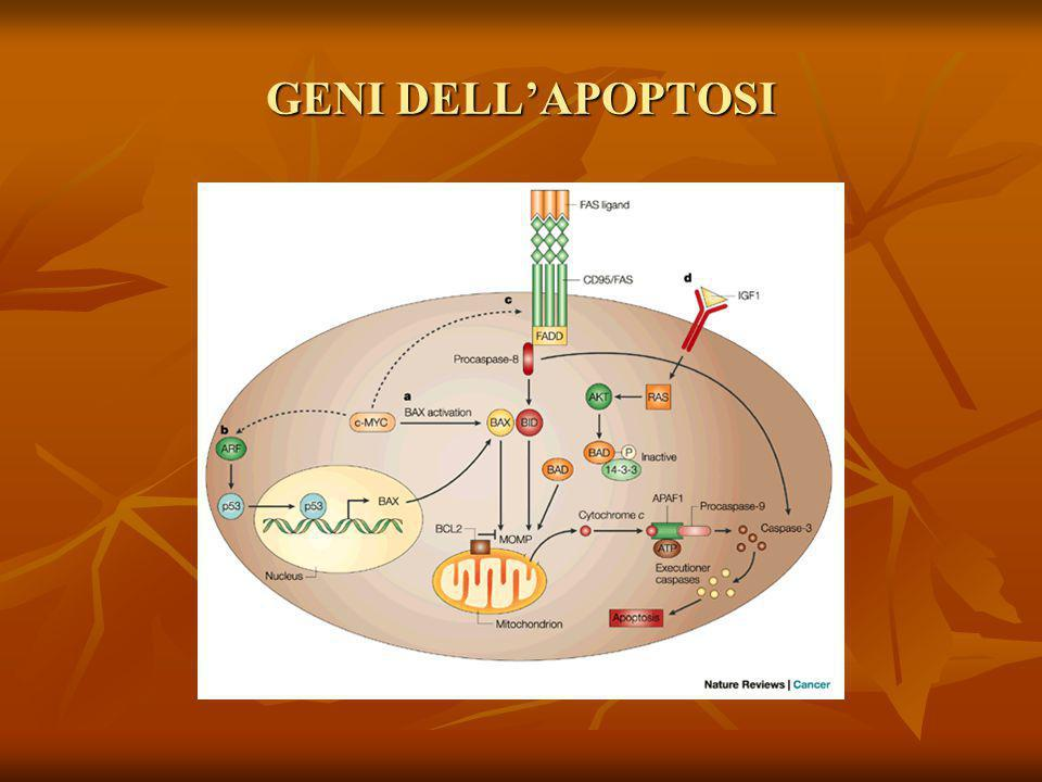 GENI DELL'APOPTOSI