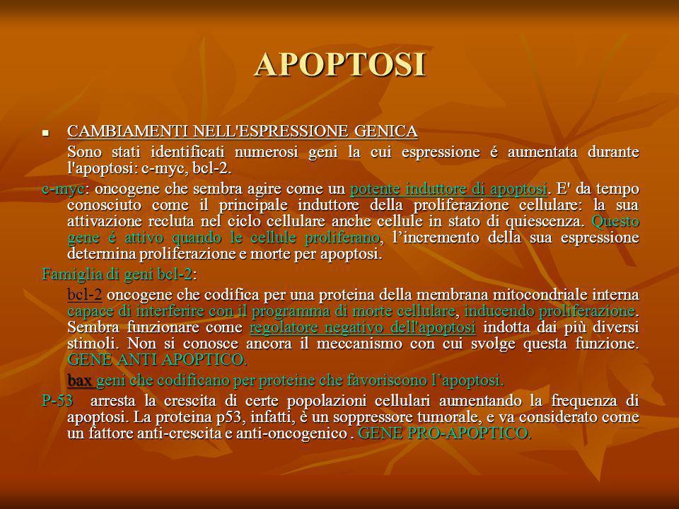 APOPTOSI CAMBIAMENTI NELL ESPRESSIONE GENICA