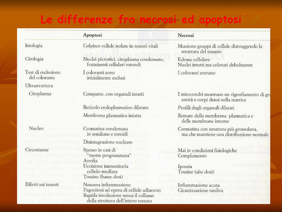 Le differenze fra necrosi ed apoptosi