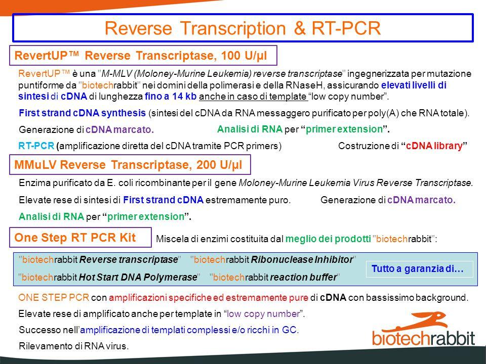 Reverse Transcription & RT-PCR