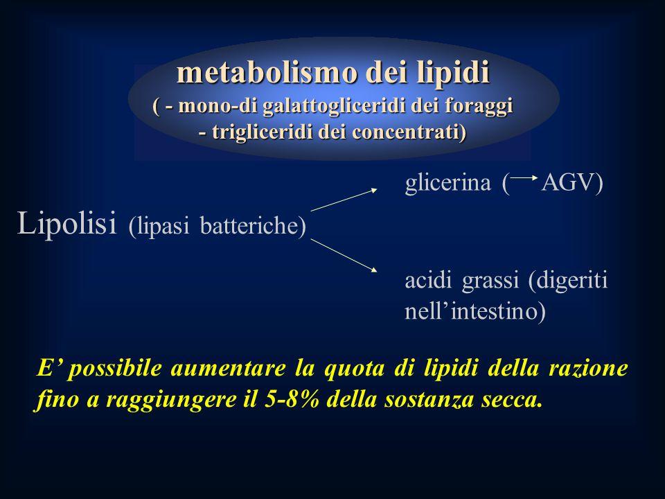 Lipolisi (lipasi batteriche)