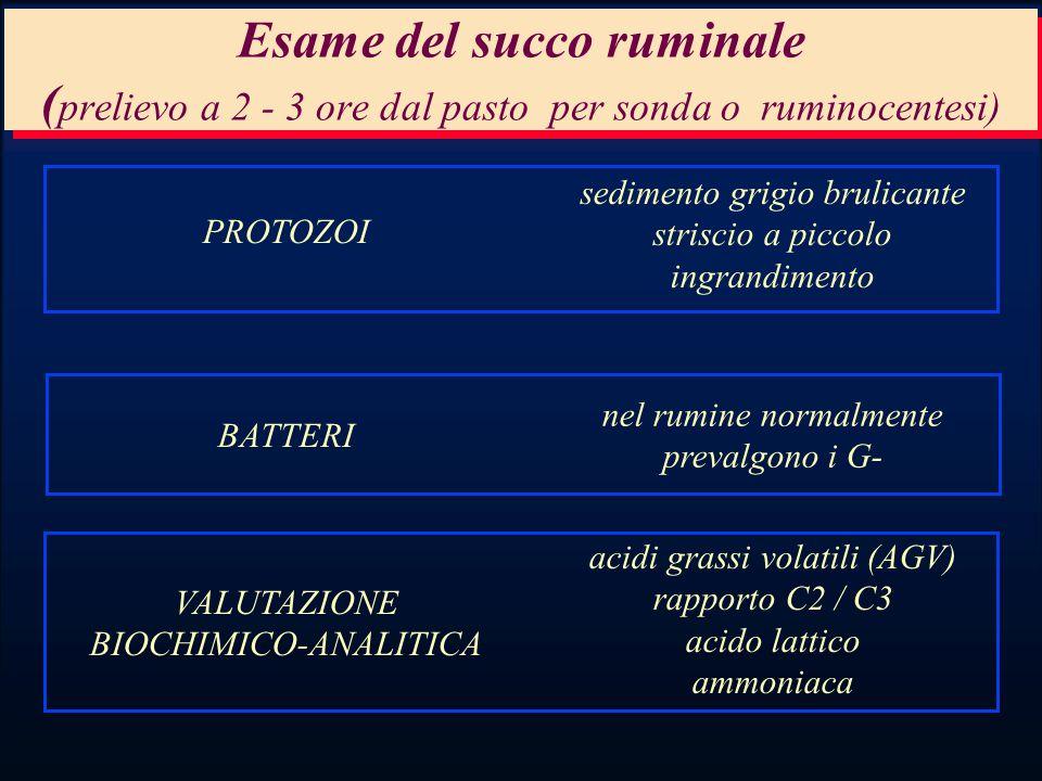 Esame del succo ruminale (prelievo a 2 - 3 ore dal pasto per sonda o ruminocentesi)