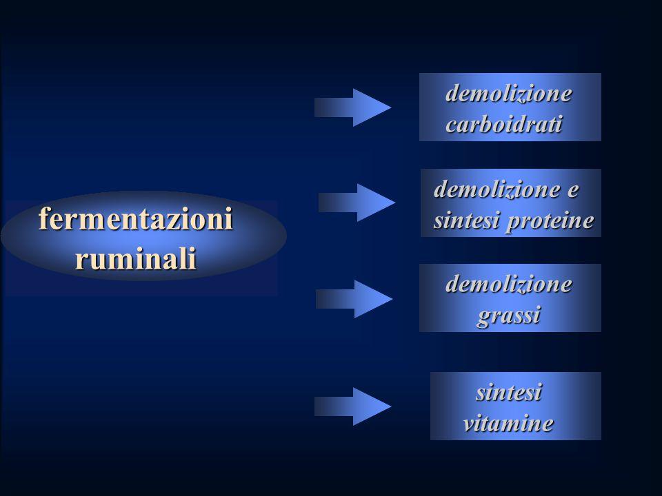 fermentazioni ruminali