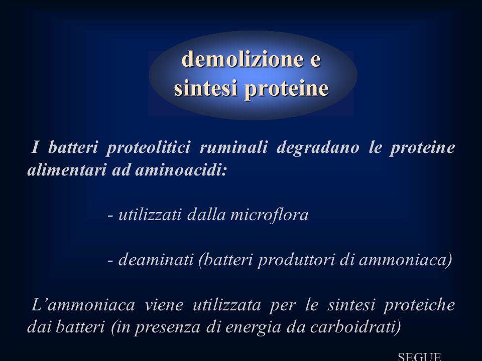 demolizione e sintesi proteine