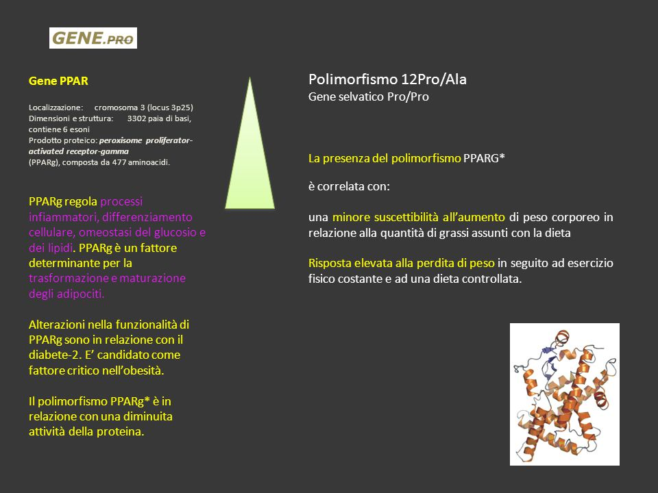 Polimorfismo 12Pro/Ala Gene PPAR Gene selvatico Pro/Pro