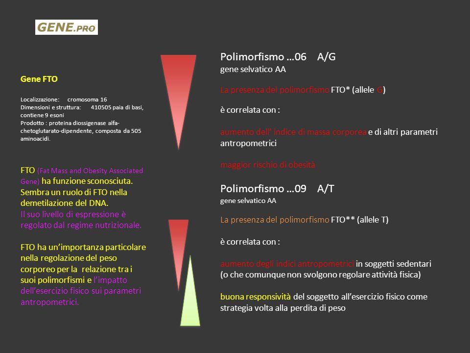 Polimorfismo …06 A/G Polimorfismo …09 A/T gene selvatico AA Gene FTO