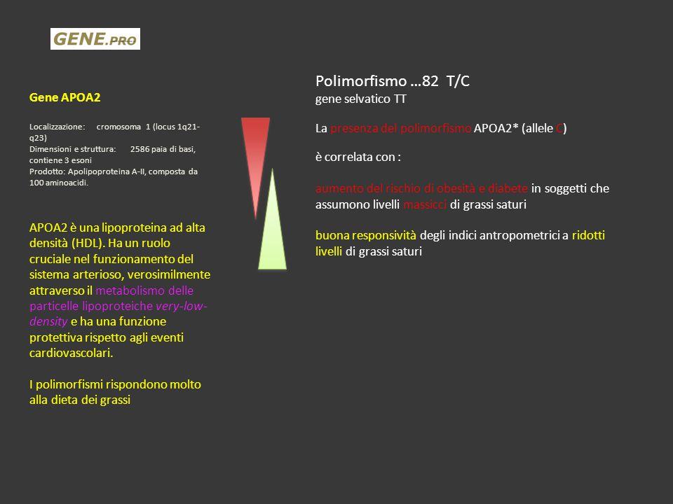 Polimorfismo …82 T/C Gene APOA2 gene selvatico TT