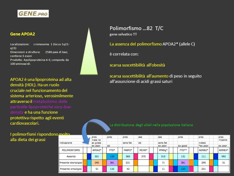 Polimorfismo …82 T/C Gene APOA2