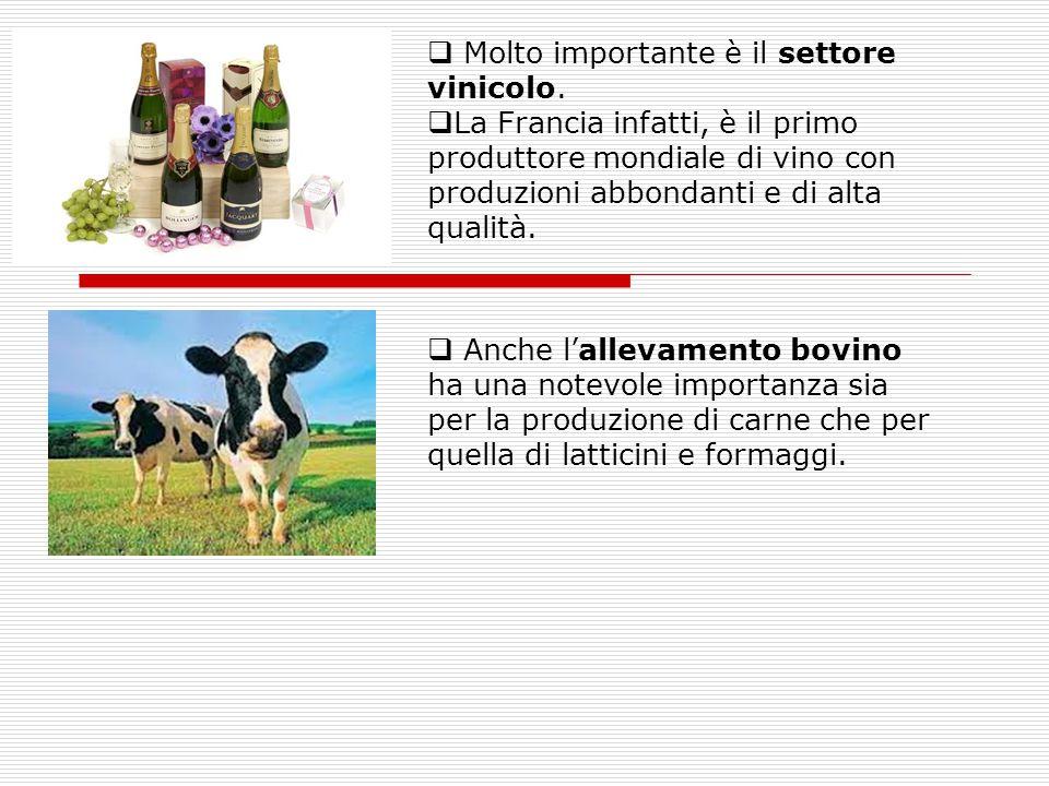 Molto importante è il settore vinicolo.