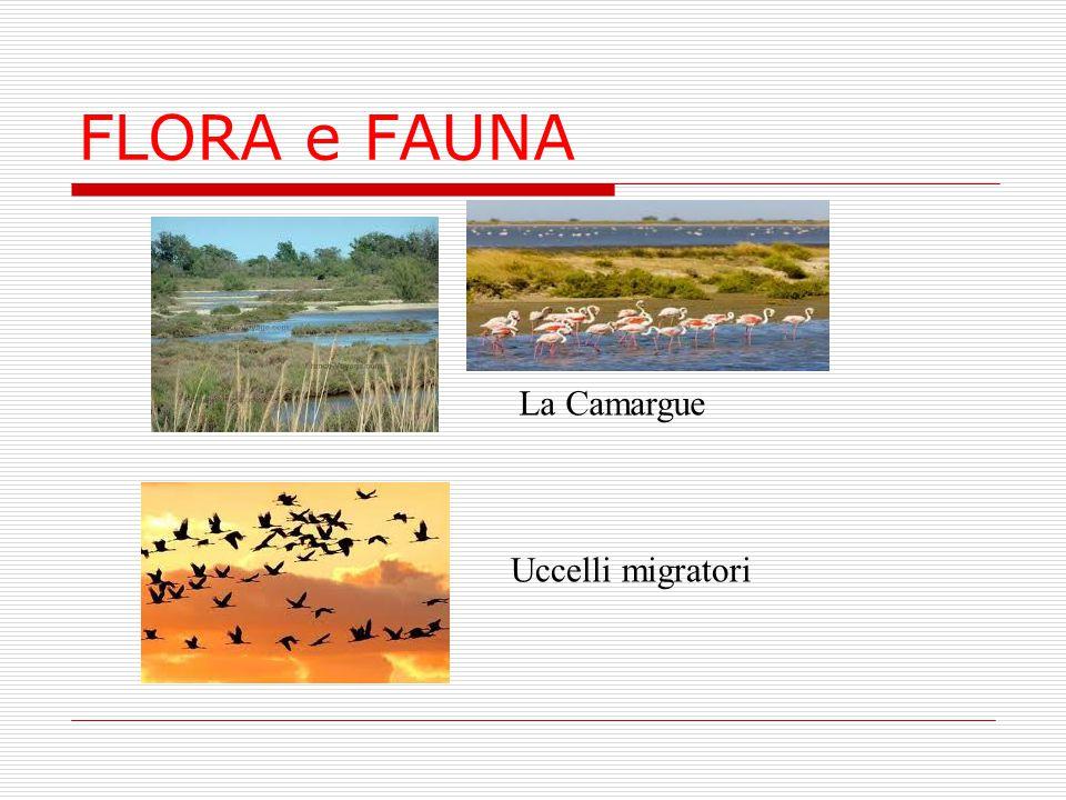 FLORA e FAUNA La Camargue Uccelli migratori